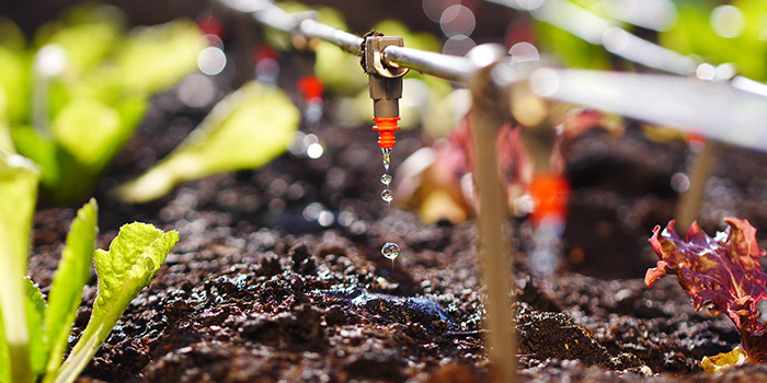 Conserving water with drip irrigation
