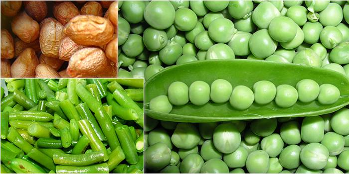 Legumes: Their importance and constraints