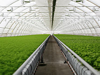 Food security through Modern Agriculture
