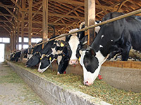 Skills Required for Livestock Production