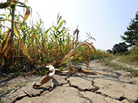 The impact of the current drought in South Africa