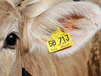 The importance of quality control and quality assurance in the livestock industry